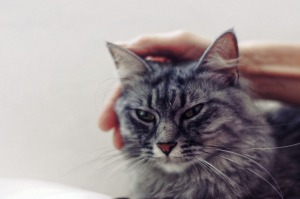 Cat CKD