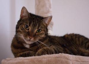 Cat CKD1