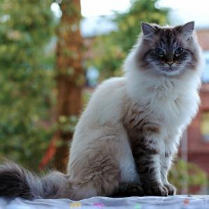 Cat CKD2