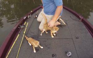 Kittens boat