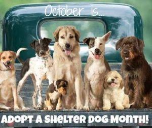 Shelter dog3