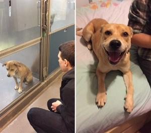 Shelter dog4