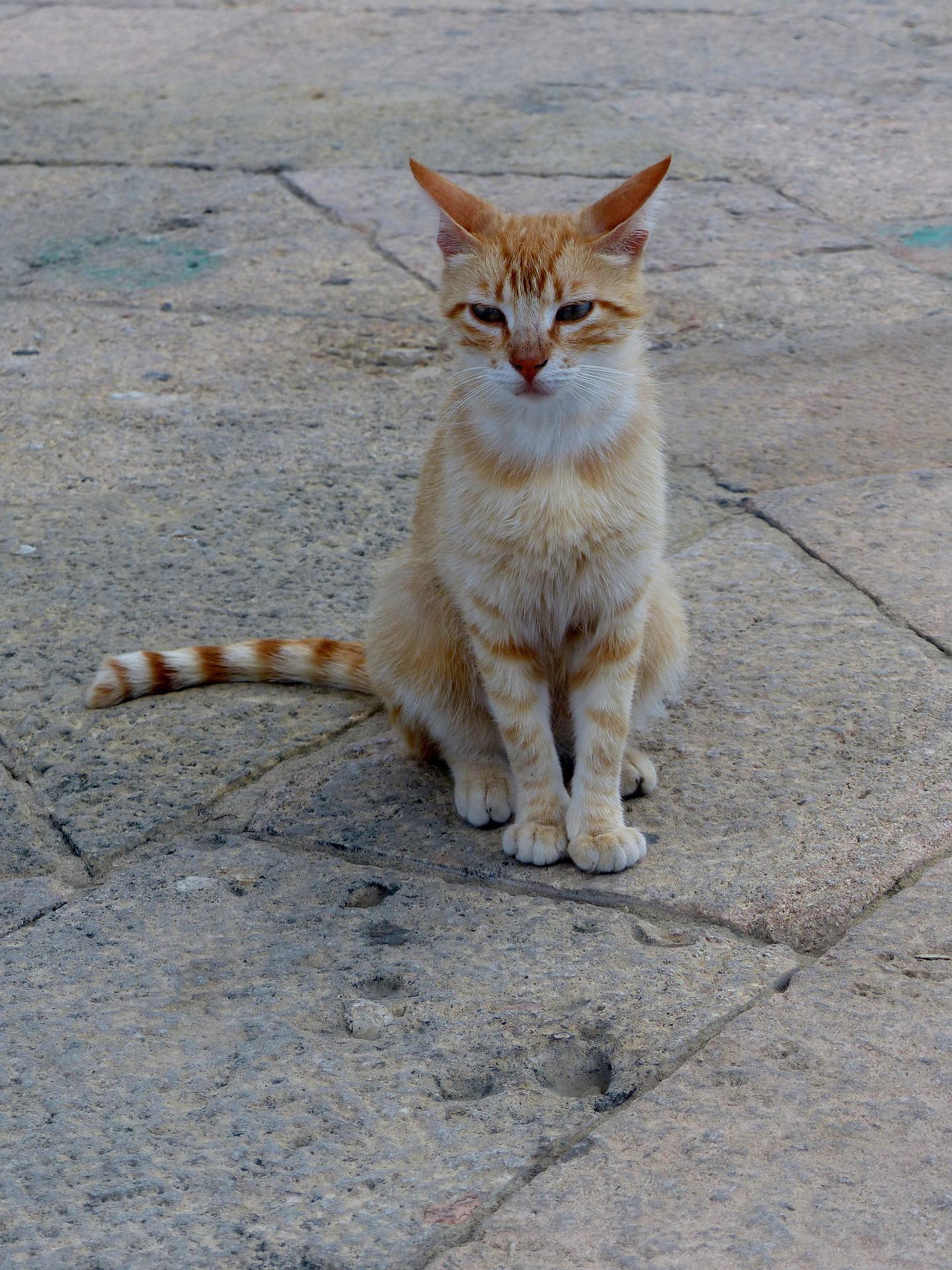 Best Trap Feral Cat