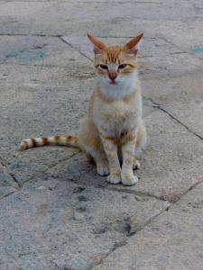 Alley cat1