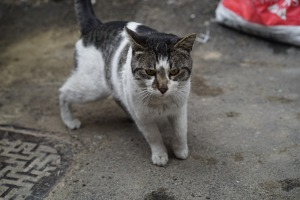 Alley cat2