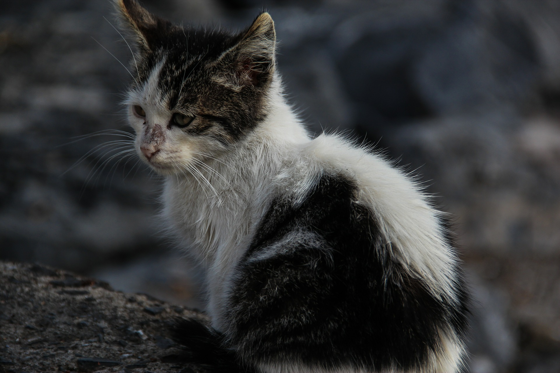 All About Trap-Neuter-Return for Feral Cats | FACE Foundation
