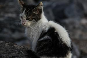 Alley cat4