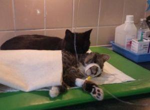 Nurse cat3