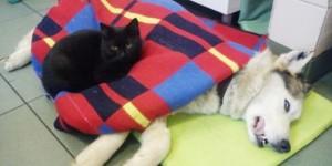Nurse cat4