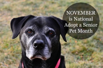 Image result for adopt a senior pet month