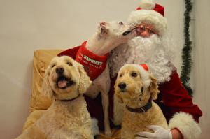 Pets with Santa10