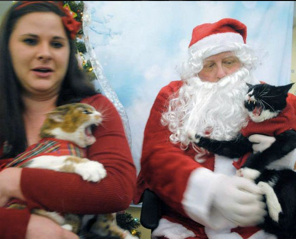 Image result for funny christmas family photos with pets