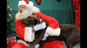 Pets with Santa3