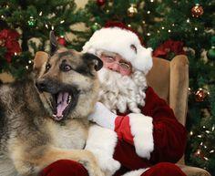 Pets with Santa4