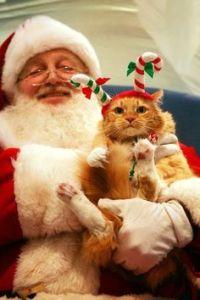 Pets with Santa5