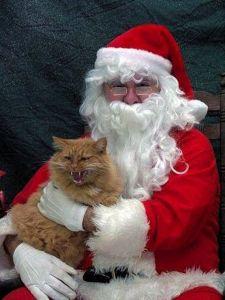 Pets with Santa6