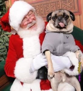 Pets with Santa8