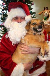 Pets with Santa9