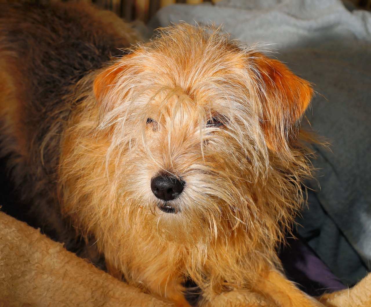 How To Treat Atopic Dermatitis In Dogs