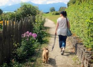 Dog walk1