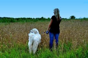 Dog walk3
