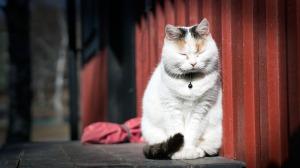 Cat pain1