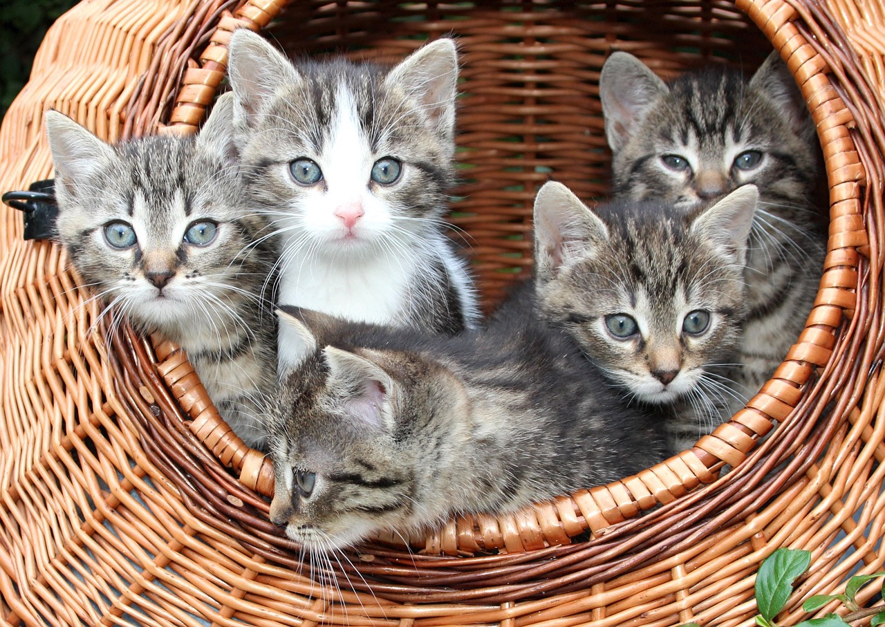 All About Fostering Kittens