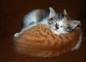 kitten foster4