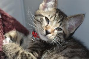 Kitten foster5