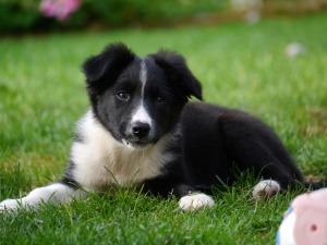 Puppy day3
