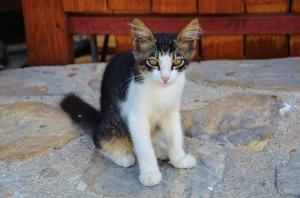 Cat URI1