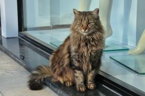 Cat URI2