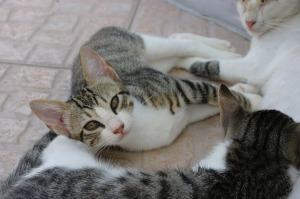 Cat Uri4