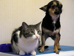 Drake Center dog cat3