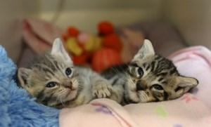 Kitten nursery