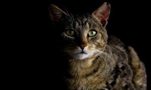 4th cat