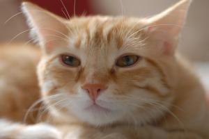 Cat food1
