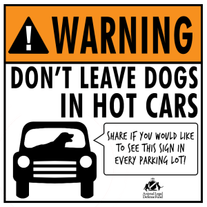 Dog hot car3