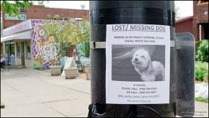 Lost pet1