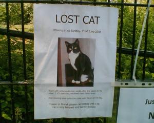 Lost pet2