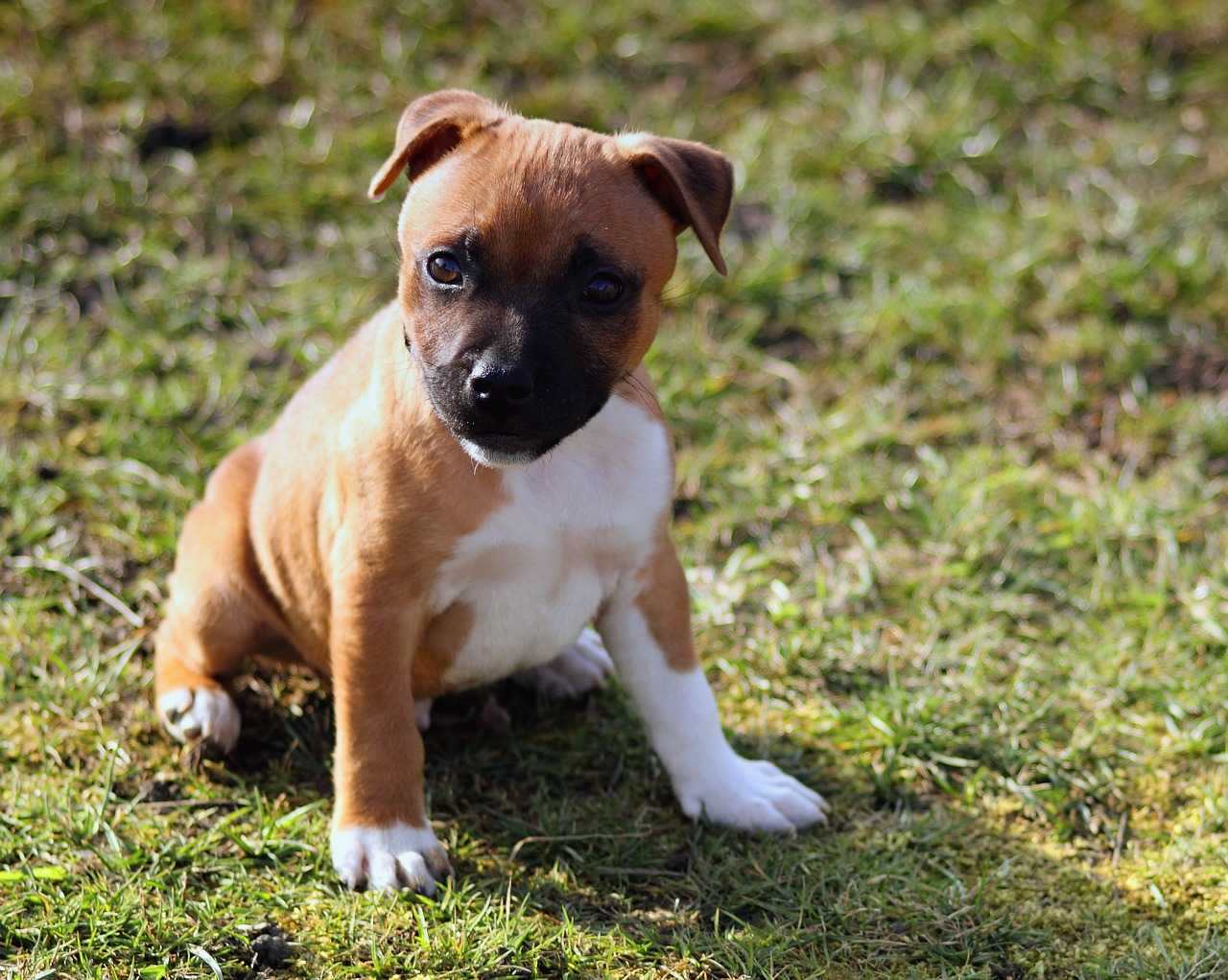 pit bull misconceptions and facts Misconceptions surround this special breed download (1) pit  in fact they  make up a group of several different breeds of dog most notably.