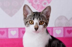 Cat parent1