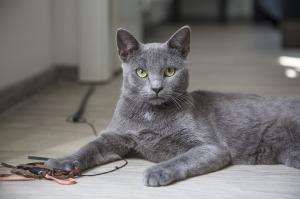 Cat parent2
