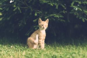 Cat vet3