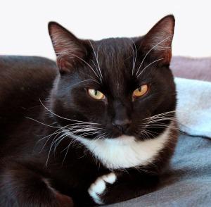 Cat vet4