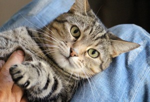 Pet data_cat