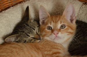 Pet data_cat2