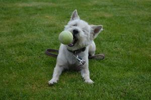Pet data_dog