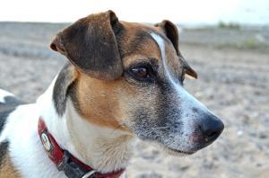 Pet data_dog2
