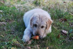 Veggie dog1